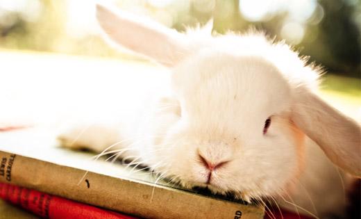 real bunny brisbane